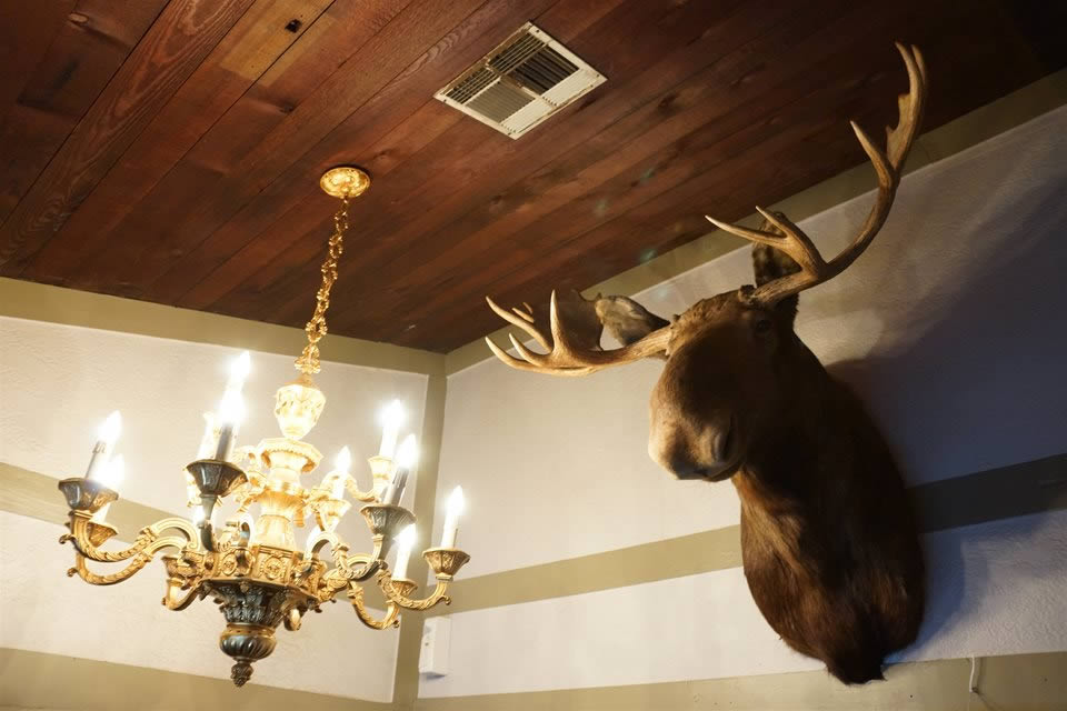 Moose Head next to Chandelier at the Colorado Strip Club